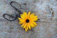 Hoogste mening van bloemen en oude schaar op houten vloer stock afbeeldingen