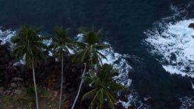 Hoogste mening van boompalm stock footage