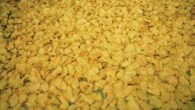 Hoogste mening van chips die zich langs de riem en het schudden bewegen Chipsproductielijn stock footage