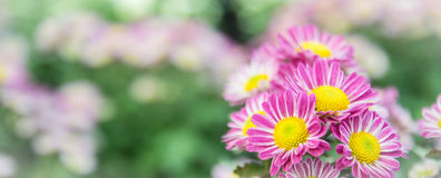 Hoogste mening van de bloemflowe als achtergrond van Mun van de Bloemist, roze en witte Royalty-vrije Stock Foto's
