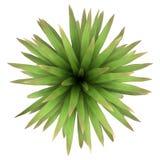 Hoogste mening van de palm geïsoleerdes van de bergkool Stock Foto's