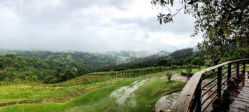 Hoogste mening van de wijngaarden in de berg tijdens bewolkt regenend seizoen stock foto