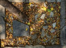 Hoogste mening van droge bladeren, boomboomstam, gebroken zwarte tegel en stenen op grond met concreet kader stock foto