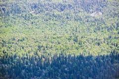 Hoogste mening van een bos seamlesss patroon Royalty-vrije Stock Foto