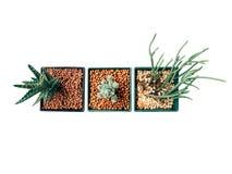 Hoogste mening van een cactus in een potten uitstekende die stijl op witte achtergrond wordt geïsoleerd Groene installaties in bl Stock Foto's