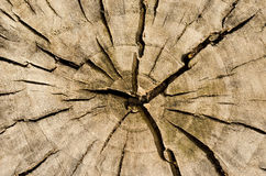 Hoogste mening van een gebarsten boomstomp Royalty-vrije Stock Fotografie