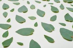 Hoogste mening van een groen bladerenpatroon Stock Foto