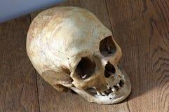 Hoogste-mening van een oude schedel Royalty-vrije Stock Afbeeldingen