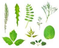 Hoogste mening van gedrukt en geïsoleerd herbarium stock foto's