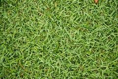 Hoogste mening van groene grasachtergrond royalty-vrije stock foto's