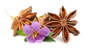 Hoogste mening van het droge fruit van de steranijsplant stock afbeeldingen