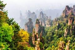Hoogste mening van het natuurlijke bos van het kwartszandsteen onder de herfsthout stock foto's