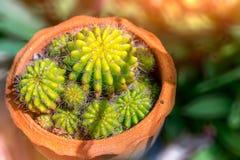 Hoogste mening van Kleine groene cactus in een pot Royalty-vrije Stock Afbeeldingen
