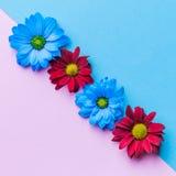 Hoogste mening van kleurrijke de lentebloemen op gekleurde achtergrond Royalty-vrije Stock Afbeeldingen
