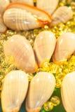 Hoogste mening van kroonslakshells met kristallen bollenmarmer Mooie bokeh en schitterende achtergronden Sluit omhoog stock foto's