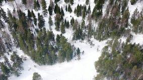 Hoogste mening van mensen die in bos in de winter wordt verloren lengte De groep actieve die toeristen werd in dicht naaldbos wor stock footage