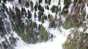 Hoogste mening van mensen die in bos in de winter wordt verloren lengte De groep actieve die toeristen werd in dicht naaldbos wor stock videobeelden