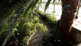 Hoogste mening van mooie palm met zijn groene brede bladeren en andere verschillende installaties binnen de botanische tuin voorr stock video