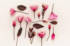 Hoogste mening van mooie roze bloemen op witte achtergrond Stock Fotografie