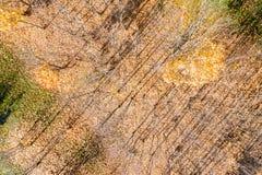 Hoogste mening van naakte parkbomen met schaduwen op grond royalty-vrije stock foto's