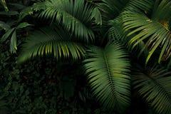 Hoogste mening van palm en de tropische installatie van het regenwoudgebladerte leav Stock Foto
