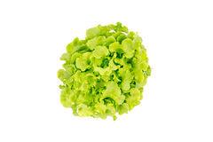 Hoogste mening van Saladebladeren, Groene Eik Stock Foto