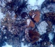 Hoogste mening van 1000 stappenertsader, Bonaire stock afbeeldingen