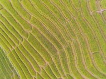 Hoogste Mening van Terrasvormig Padieveld in Heuvel Royalty-vrije Stock Foto