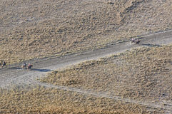 Hoogste mening van toeristen die hourses berijden om Bromo in het Nationale Park van Bromo Tengger Semeru, Oost-Java op te zetten Stock Fotografie