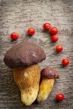 Hoogste mening van twee die pijnboom bolete (Boleetpinophilus) paddestoelen met rode lijsterbessenbessen worden verfraaid Royalty-vrije Stock Afbeeldingen