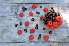 Hoogste mening van vaashoogtepunt van rode framboos en blackcurrant, verspreide bessen grijze achtergrond Royalty-vrije Stock Afbeelding
