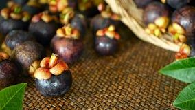 Hoogste mening van verse heerlijke geoogste mangostans op houten lijst Thais organisch purper fruit in de mand stock footage