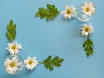Hoogste mening van witte chrysantenbloem in glas, bloembloei mooi op blauwe achtergrond Royalty-vrije Stock Afbeeldingen