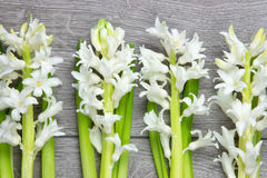 Hoogste mening van witte hyacintbloemen Stock Afbeeldingen