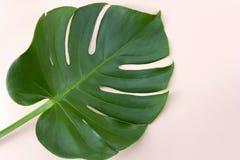 Hoogste menings groen tropisch blad op pastelkleur roze achtergrond royalty-vrije stock afbeeldingen