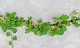 Hoogste menings kleurrijke groene installaties met gele bloempatronen die in concrete barstenvloer groeien, aardachtergrond royalty-vrije stock afbeelding