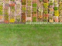 Hoogste menings luchtfoto van bloemgebied op stedelijk gebied Stock Fotografie