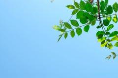 Hoogste meningsbeeld van een boomtak met een hemel als achtergrond stock fotografie