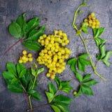 Hoogste meningsbos van witte druiven en groene bladeren met waterdalingen op de donkere concrete achtergrond Selectieve nadruk Royalty-vrije Stock Fotografie