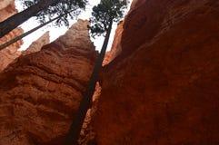 Hoogste Muren van Hodes in Bryce Canyon Formations Of Hodes geology Reis nave royalty-vrije stock foto's