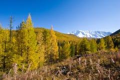 Hoogte omhoog in de bergen stock foto's