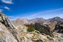 Hoogte omhoog in de bergen Altai. stock foto