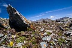 Hoogte omhoog in de bergen Altai. stock afbeeldingen