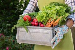 Hoogtepunt van het de holdingskrat van de Unrecognisable het vrouwelijke landbouwer van vers geoogste groenten in haar tuin Inlan royalty-vrije stock foto's