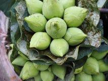 Hoogtepunt van lotusbloem Royalty-vrije Stock Foto