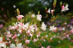Hoogtepunt van witte bloemen royalty-vrije stock fotografie