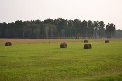 hooi Stock Foto