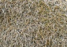 Hooi dichte omhooggaand als achtergrond Oude hooitextuur Droog gras Natuurlijke achtergrond Malplaatje of spot omhoog Tarwestro Royalty-vrije Stock Afbeelding