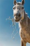 Hooi die paard 2 eten Stock Foto