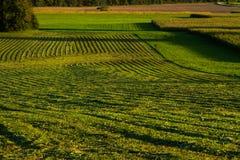 Hooi het oogsten Stock Foto